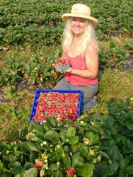 strawberry farmer